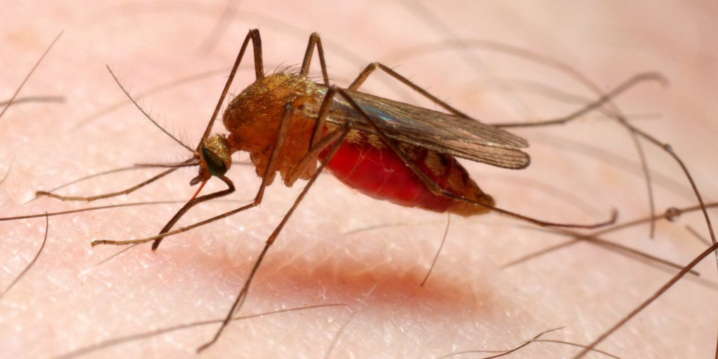 Ending malaria: Global partners to announce new commitment